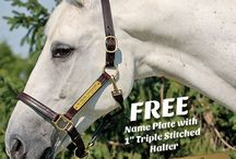 Big Dee's Special Sales / Extra special savings at Big Dee's Tack and Vet Supply