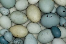colour duck egg blue