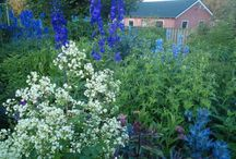 Thalictrum Combinations / Plant partnerships that include meadow rues