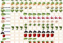 Stagionalità ortaggi e frutta