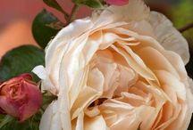 Flowers / by Dale Floyd