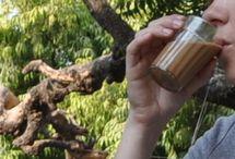 Massas Chai-Tea