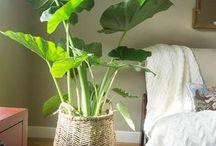 Indoor plants and garden