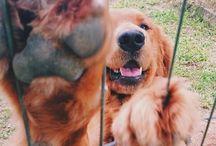 Χαριτωμένα Σκυλια