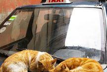 231-cat / 길에서 만난 고양이