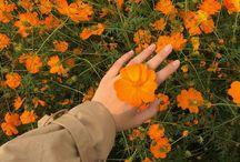 •Flower•