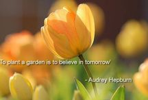 Plant your Garden/Garden Ideas