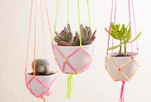 Pretty Plants / decorating with house plants has never looked this good / by Lamps.com