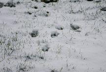 Dem Schnee auf der Spur 01 | 16