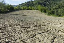 Il nostro campo di canapa / Coltivazione di canapa ad uso alimentare