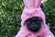 Animals ~ All Dressed Up / dressing our pets