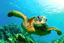 Private Marine Turtle Tour