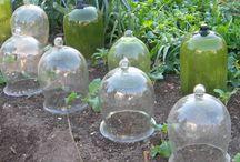 Glassclochs