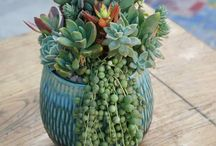 Contemporary Succulent Arrangements