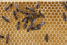 Beauty and the Bees / Things of interest from the Bee Good team and some of our friends