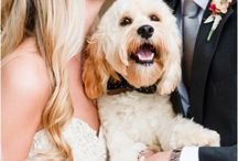 Doggo wedding pics