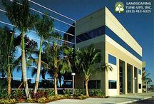 Commercial Landscaping Tampa Maintenance / Commercial landscaping Tampa professionals, Landscaping Tune-Ups, Inc. can design and maintain your commercial property's landscaping. Call (813) 413-6325 today.