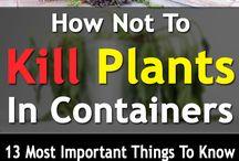 potted plants dangers