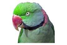 Educational Parrot Websites / Websites that I have found to be helpful in caring for all kinds of parrots.