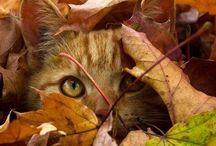cats ist love / zvierata