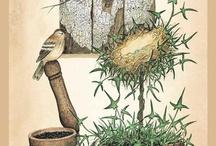 картинки Сад, огород