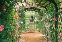 Сад +ландшафтный дизайн
