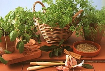Herbs / Some of my favorite herbs to grow and use.