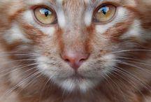 macska okos
