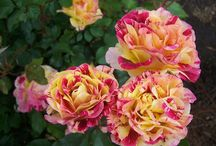 Plants for Great Cut Flowers / Here are some great plants for growing your own cut flowers.