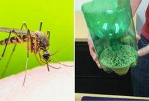 Mod myg