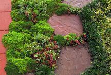 Zahradní variace