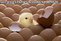 Słodkie kurczaczki