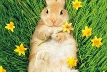 Velikonočnění