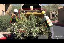 Tree Trimming Services Photos & Videos