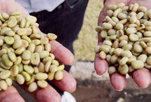 Independent Coffee Distributors