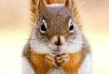 Animals - Squirrels and Chipmunks