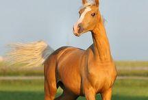 A HORSE OF COURSE!!!!