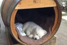 Give the dog a home! / The coolest dog kennel ideas.