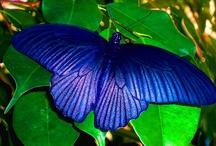 motyle butterflies / motyle butterflies