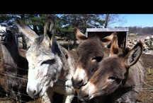 Painted Rock Animal Sanctuary  / Photos from the Painted Rock Animal Sanctuary. / by Mark Munroe