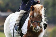 Baby and pony