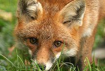 wildlived animals