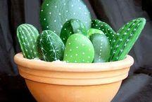 piante grasse con sassi