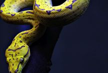 Pet Snakes / Snakes animals pets