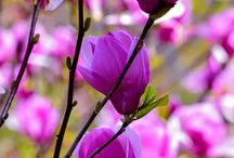 BEAUTIFUL FLOWER POWER