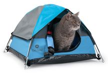 Cats and their tiny tents / Photo of cats in their tiny tent beds.