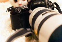 Chat photographe / Chat