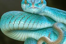 critters with scales
