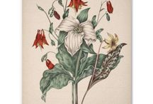 Botanical pictures