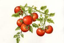 Moodboard Pompei tomato